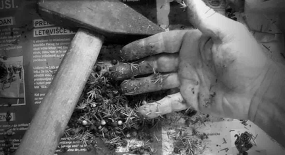 hand cleaning-plants-krucefix-hand